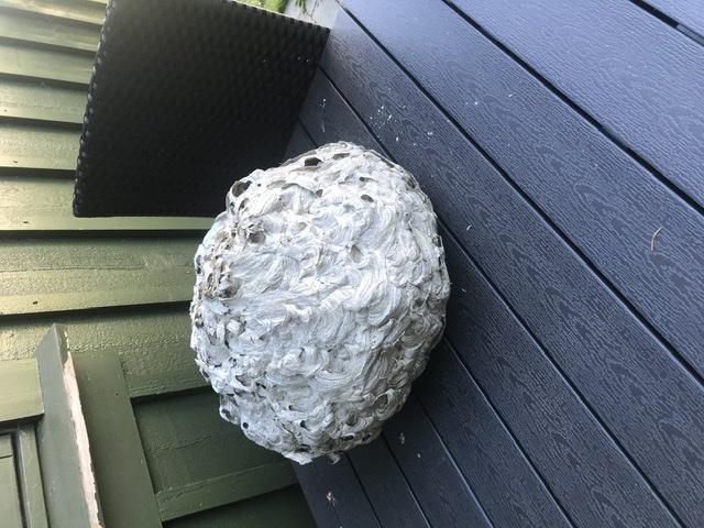 hvepsebobekæmpelse